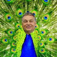 Orbán Viktor lassan tanulhatja a féllábú pávatáncot