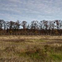 Romok az erdőben: Bartány vára a bezdáni Kozarában