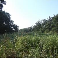 A bezdáni Kozara erdő