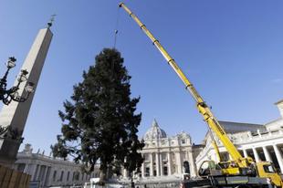 Lengyel karácsonyfa érkezett a Szent Péter térre