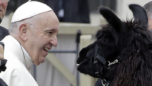 Lám, a pápa meg egy pár láma!