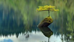 Ezek a fák igent mondtak az életre