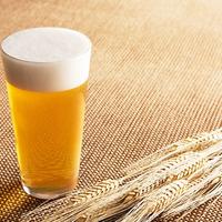 Folyékony kenyerünk: A sör