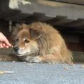 Az állatmentő jó érzése