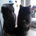 A macskák önző, területközpontú lények...