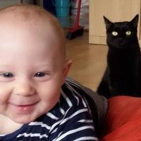 Gyerek vs. macska – avagy megférnek-e egymás mellett?