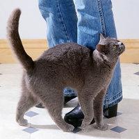 Miért bújnak a cicák?