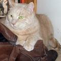 Menhelyi cica mellé fogadnék be másikat - 1. rész