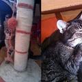 Hogyan szelidíthető kézhez egy elvadult cica?