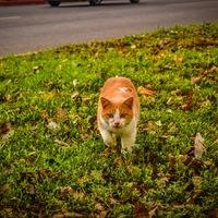 Itt a tavaty! Hol a cicám? - 2. rész - UPDATE!