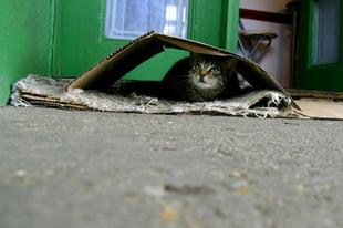 Ha segítenél egy kóbor cicán... akkor segíts!