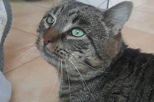 Vadkandúrkából lehet bújós cica? - 2. rész