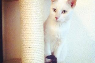 Így lett halálos méregből boldog cica, vagyis Ciánból Félix