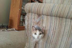 Macskakaparás vs. bútorok 2. rész