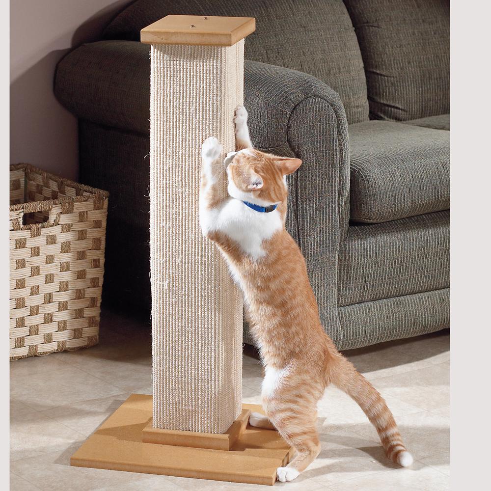 cat-scratch-post-at-home.jpg