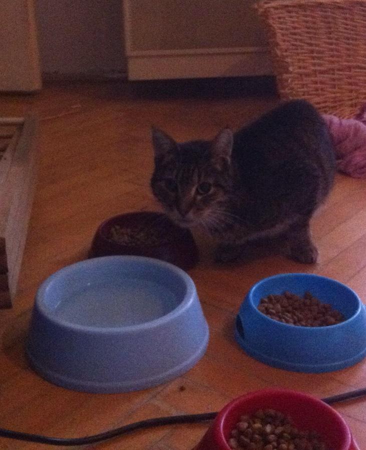 Belógott megzabálni a többi cica kajáját :D