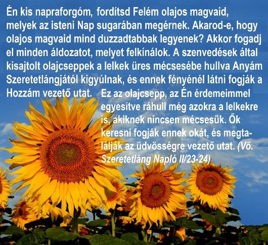 015legy_te_a_napraforgo_530.jpg