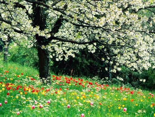 fiori6.jpg