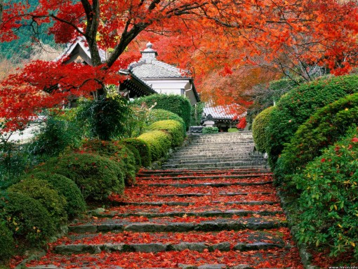 gardenstaircase_kyoto_japan.jpg