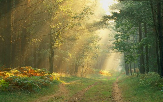 hu_sun_rays_in_the_forest_germany.jpg