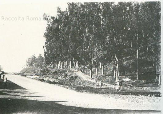 romasparita_9_530.jpg
