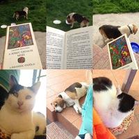 Együtt olvastunk...