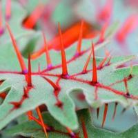 Kapanyél vendégposzt - Fura halloween-növények