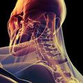 Programajánló:The Human Body kiállítás