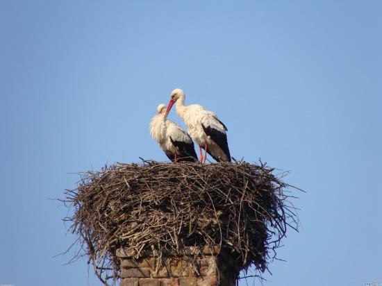stork_nest_3264x2448.jpg