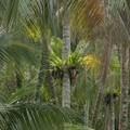 Palau Ubin, a trópusi sziget