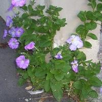 Korszerű kertészet a növények szemszögéből