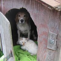 Kutyák-macskák 53:47