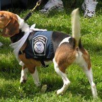 Nyomoz a Beagle Brigád