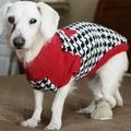 Chanel már nem a világ legöregebb kutyája