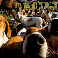 Támad a kutyainfluenza