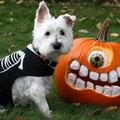 A kutyák és a Halloween