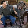 A világ legnagyobb kutyája - van másik!