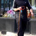 Hugh Jackman új francia bulldogja