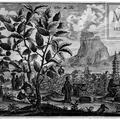 Jean-Baptiste Du Halde (1674-1743)  A Kínai Birodalom és Tatárföld földrajzi, történeti, kronológiai, politikai és fizikai leírása  1735