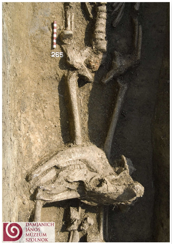 A marhakoponya közelről