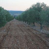 Olaj és bor: látogatás a MasVin szövetkezetben