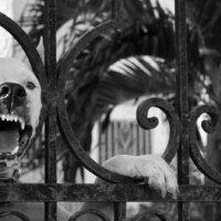 64. Olvasói levél: a szomszéd kutya