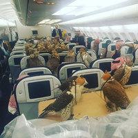 Kifordult világ… amikor már a sólymok is repülőn utaznak