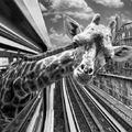 Animetró: állatok a párizsi metróban