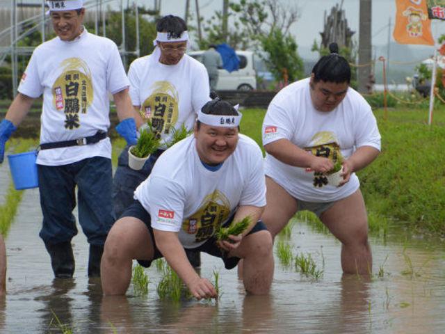Hakuho-rizs - avagy a földműves yokozuna története
