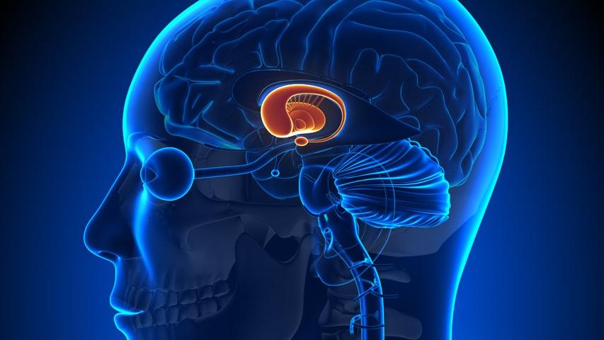 brain_853x480_jpg-min.jpg