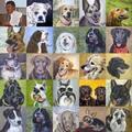 BKV: A kutyák vitték csődbe a vállalatot