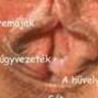 A puncika anatómiája
