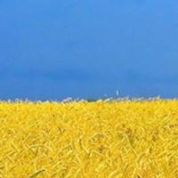 Az új ukrán oktatási törvény, 7. cikkely