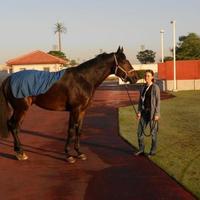 Ostinato starthoz áll Dubaiban! Kieren Fallon a nyeregben.